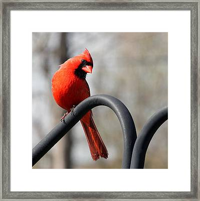 Holiday Red Framed Print by Penny Hunt