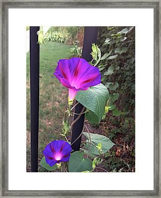 Holland Gate Framed Print