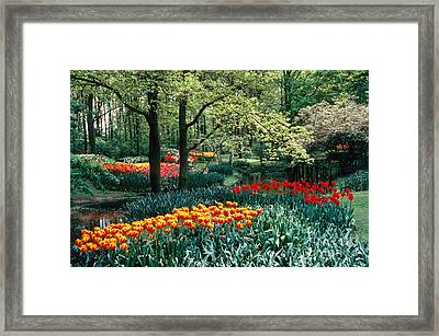 Holland Kuekenhof Garden Framed Print by Dale P Hanson and Photo Researchers