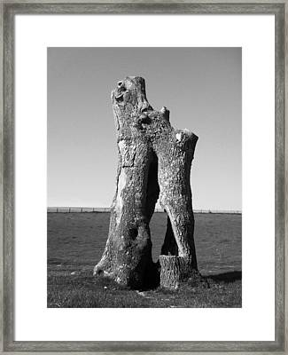 Hollow Trunk Framed Print