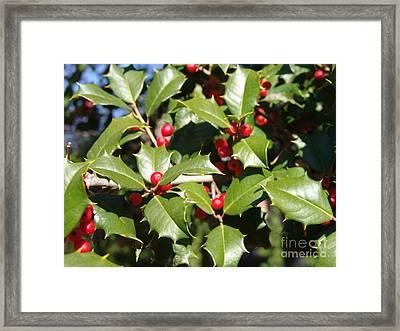 Holly 3 Framed Print