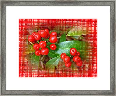 Holly Berries Framed Print by Mother Nature