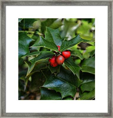Holly Berries Framed Print by Rick Friedle
