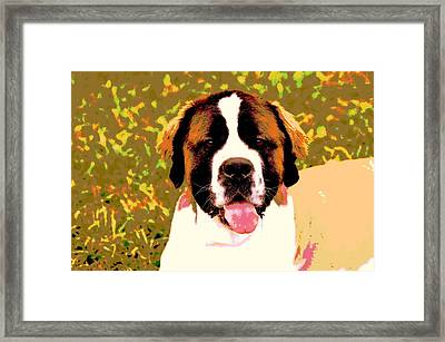 Holly Framed Print by Dorrie Pelzer