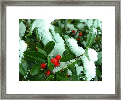 Holly In Snow Framed Print by Sandi OReilly