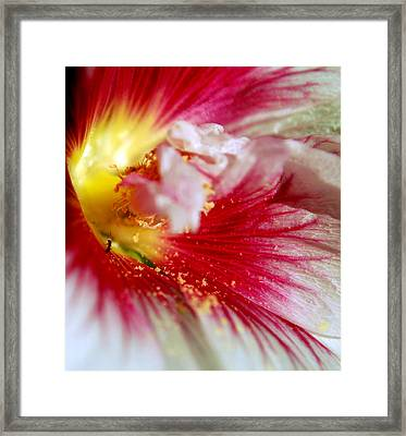 Hollyhock And The Ant Framed Print