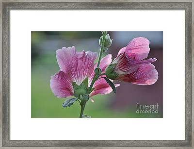 Framed Print featuring the photograph Hollyhocks by Tamera James