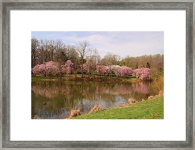 Holmdel Park In Spring Framed Print by Angie Tirado