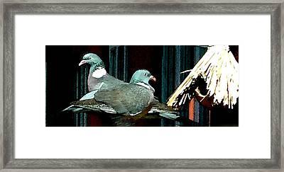 Holy Pigeon Couple Mates For Ever Enjoy The Garden Peace Framed Print by Colette V Hera  Guggenheim
