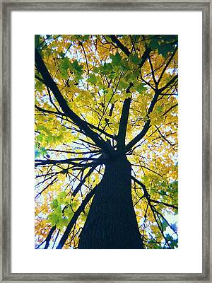 Homage To Georgia O'keefe Framed Print by Todd Sherlock
