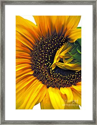 Homecoming Framed Print by Gwyn Newcombe