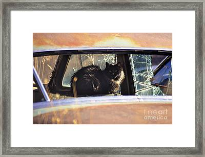Homeless Framed Print by Juls Adams