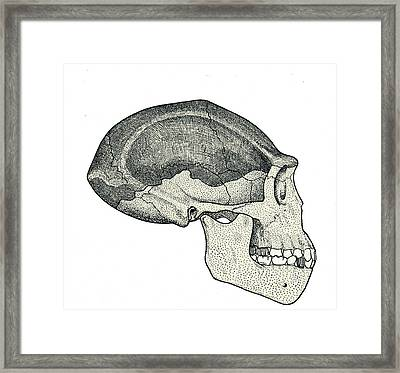 Homo Erectus Skull Framed Print by Sheila Terry