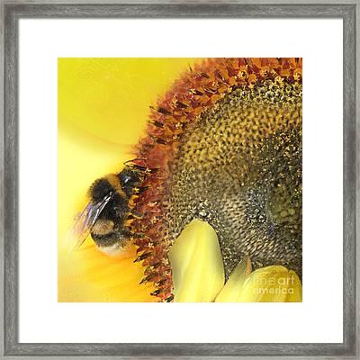 Honey Bee Framed Print by Anne Weirich
