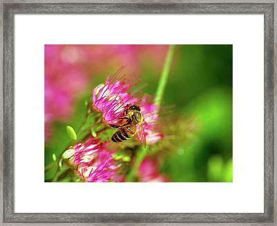 Honey Bee Lands Framed Print