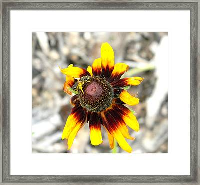 Framed Print featuring the photograph Honey Bee On Yellow Daisy by Jodi Terracina