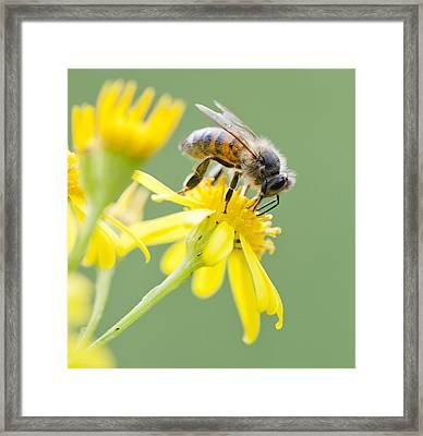 Honey Pot Framed Print