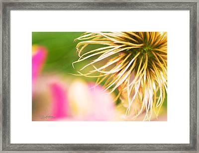 Honey Suckle Afterbloom Framed Print