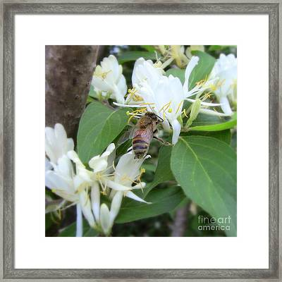 Framed Print featuring the photograph Honeybee Collecting Pollen by Renee Trenholm