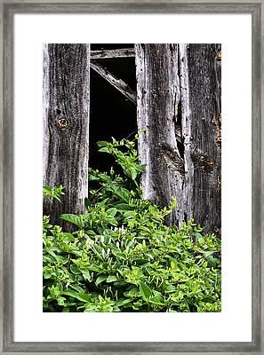 Honeysuckle Framed Print by JC Findley