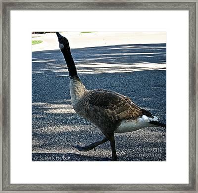 Honk And Strut Framed Print by Susan Herber