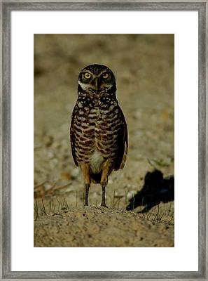Hoo Are You? Framed Print