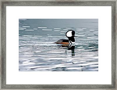 Framed Print featuring the photograph Hooded Merganser by Scott Holmes