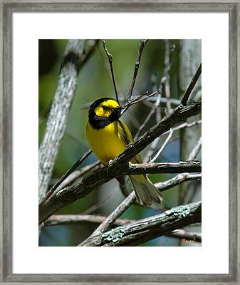 Framed Print featuring the photograph Hooded Warbler Dsb166  by Gerry Gantt
