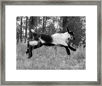 Hop Skip Jump Framed Print by Christean Ramage