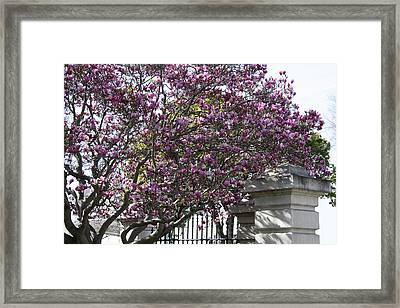 Hope For Spring Framed Print by Susan Alvaro
