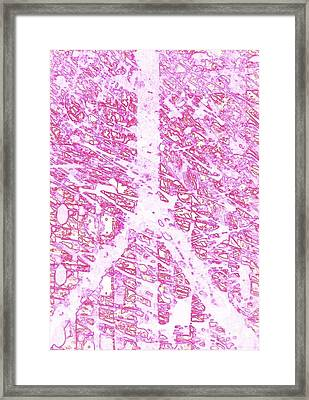 Hope Peace Framed Print by Robert Haigh