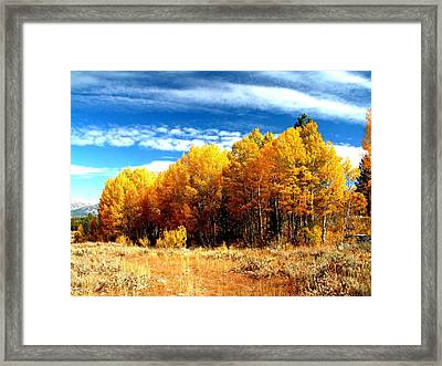 Hope Valley Aspens Framed Print by Michael Courtney