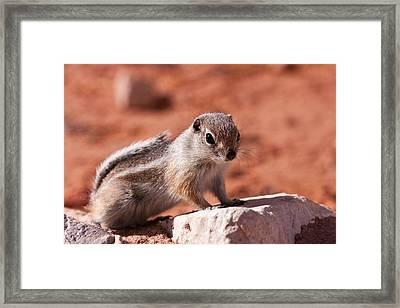 Hopeful Lookout Framed Print