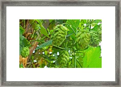 Hops Vine Leaf And Seed Cones Framed Print by Padre Art