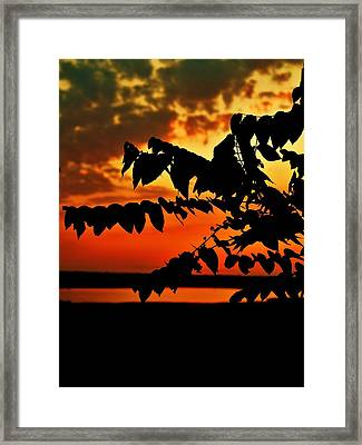 Horicon Marsh At Sunset Framed Print by Alisha Luby