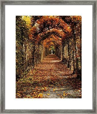Hornbeam Alles, Birr Castle, Co Offaly Framed Print