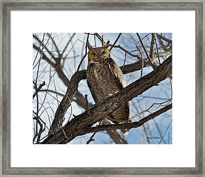 Framed Print featuring the photograph Horned Owl In Tree by Stephen  Johnson