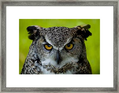 Horned Owl Framed Print