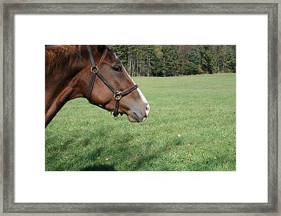 Horse-1 Framed Print by Denise Moore