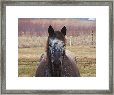 Horse-1 Framed Print by Todd Sherlock