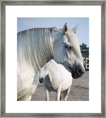 Horse-15 Framed Print by Todd Sherlock