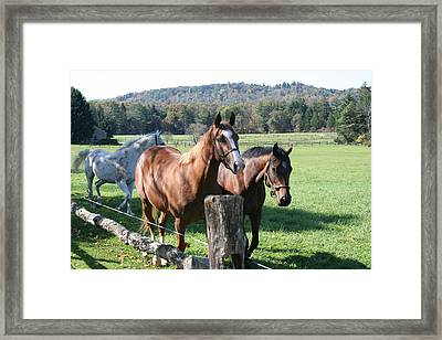 Horse-3 Framed Print by Denise Moore