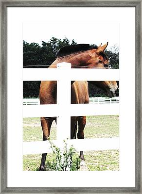 Horse-4 Framed Print by Todd Sherlock