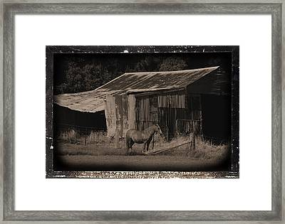 Horse And Old Barn Framed Print