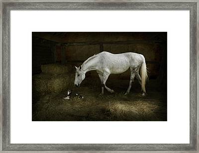 Horse And Puppy In Stable Framed Print
