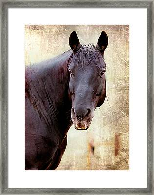 Framed Print featuring the photograph Horse  by Anna Rumiantseva