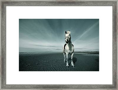 Horse At Irvine Beach Framed Print by Mikeimages