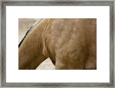 Framed Print featuring the photograph Horse Bending Neck by Lorraine Devon Wilke