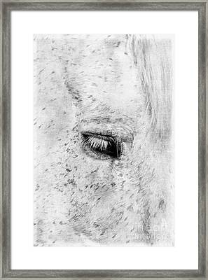 Horse Eye Framed Print by Darren Fisher