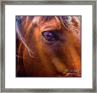 Horse Eyes Framed Print